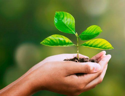 A importância do Licenciamento Ambiental