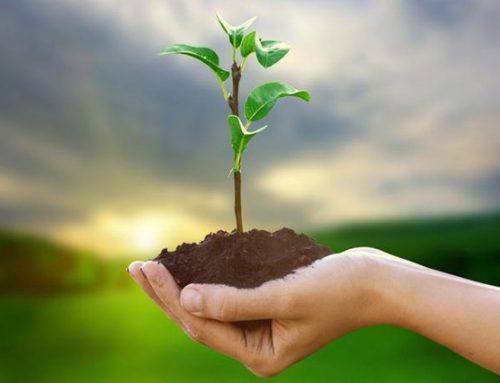IBAMA lança novo sistema para licenciamento ambiental